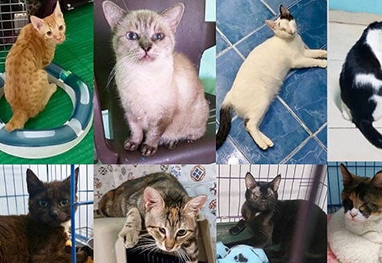 cats-cairo-lida-vets-rescue