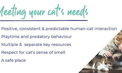 Cats needs