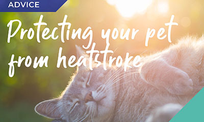 Protect your pet from the sun